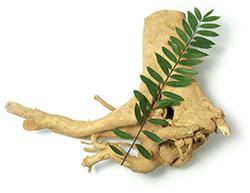 eurycoma-longifolia-jack
